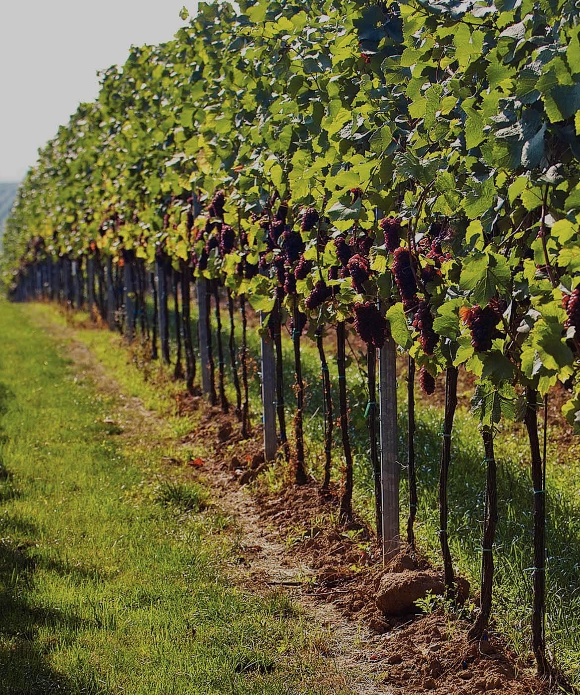 Australian Shiraz - Best Australian Shiraz - SA Wine Online