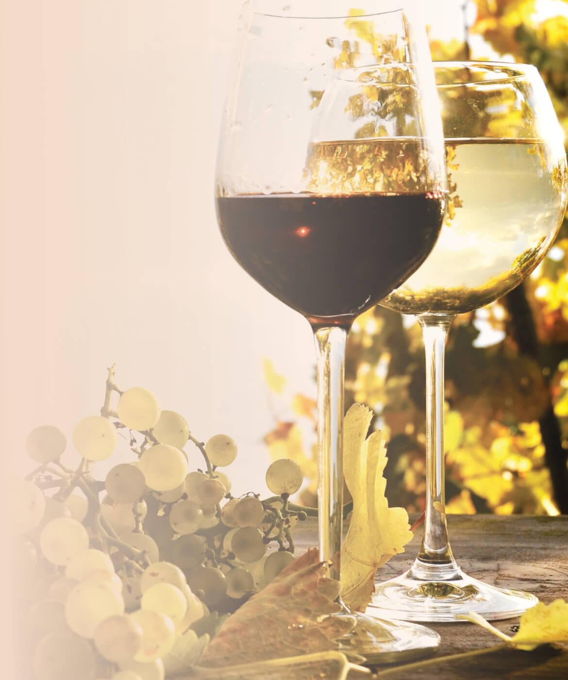 sa wines12